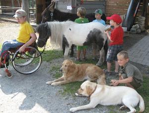 Gemeinsam im Pferdestall